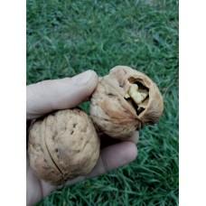 Семенной орех Идеал ( Венгерский)