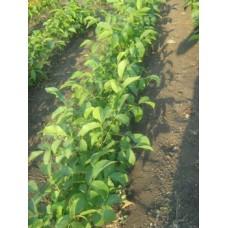 Методика выращивания плодовых и овощных культур без полива.