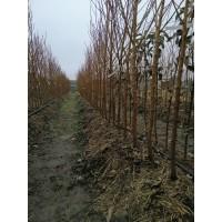 Покупка саженцев осенью-зимой. Посадить или сохранить?