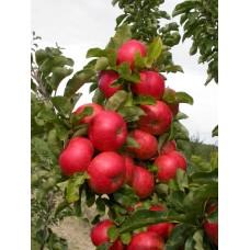 Трактат о питании растений. Это должен знать каждый садовод.
