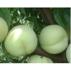 Саженец персика Айс Пич (белый персик)