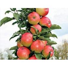 Саженец яблони колоновидной Валюта (Valyuta)